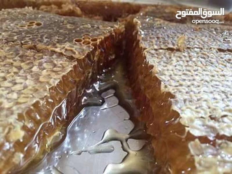 شهد العسل Tajircom